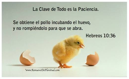 Se obtiene el pollo incubando el huevo, y no rompiéndolo para que se abra