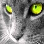 La Energía Purificadora de los Gatos