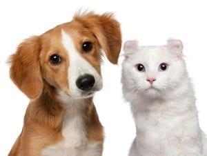 Los gatos, ¿son tan inteligentes como los perros?
