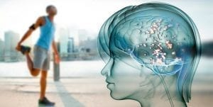 Los increíbles cambios ocasionados en nuestro cerebro por dejar de hacer ejercicio