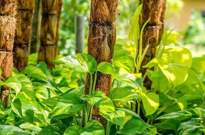 Plantas que atraen energía positiva en los espacios