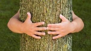 De qué forma captar la energía sanadora de los árboles