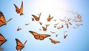 La mariposa es el símbolo del ánima
