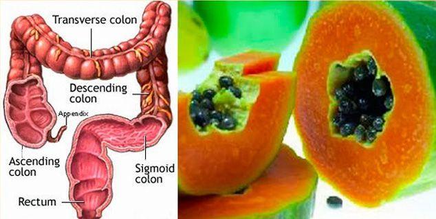 papaya-digestion