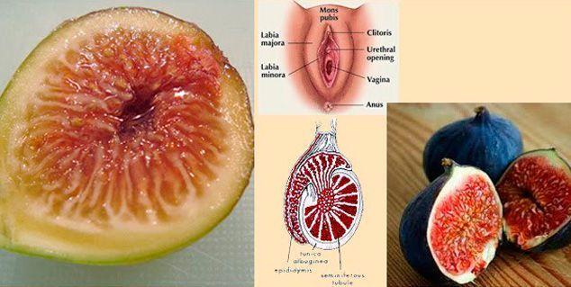 higos-testiculos-y-vagina