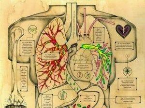 Los efectos que las emociones negativas tienen sobre nuestra salud