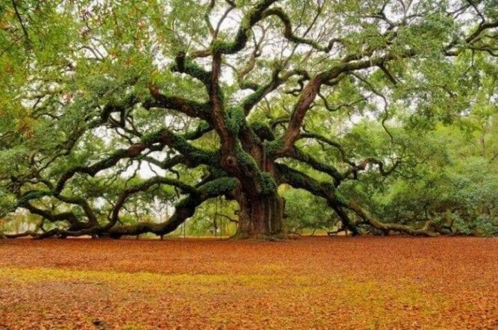 Descubre qué árbol eres según tu fecha de nacimiento