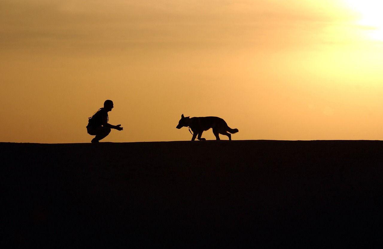 dogs foto