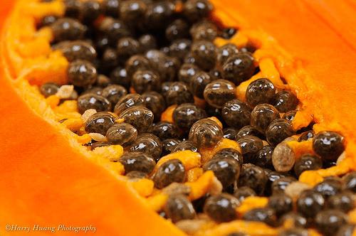 semillas-lechoza